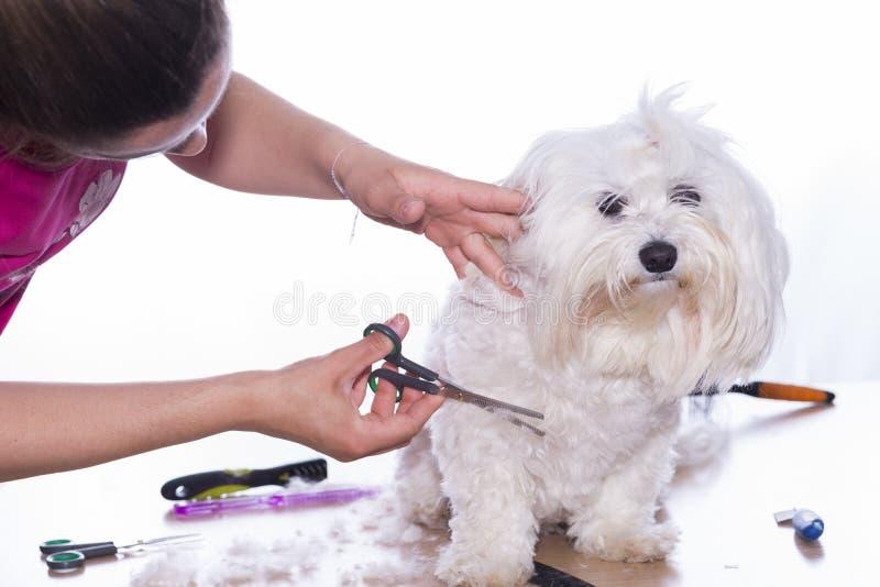 Corte canino do cabelo imagem de stock royalty free
