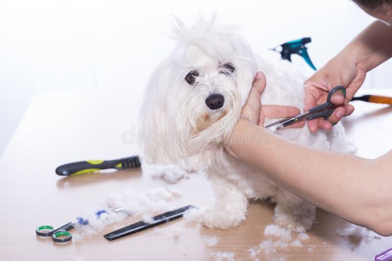 Corte canino do cabelo foto de stock