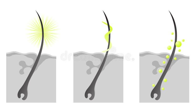 Corte cosmético de las características de Haircare libre illustration