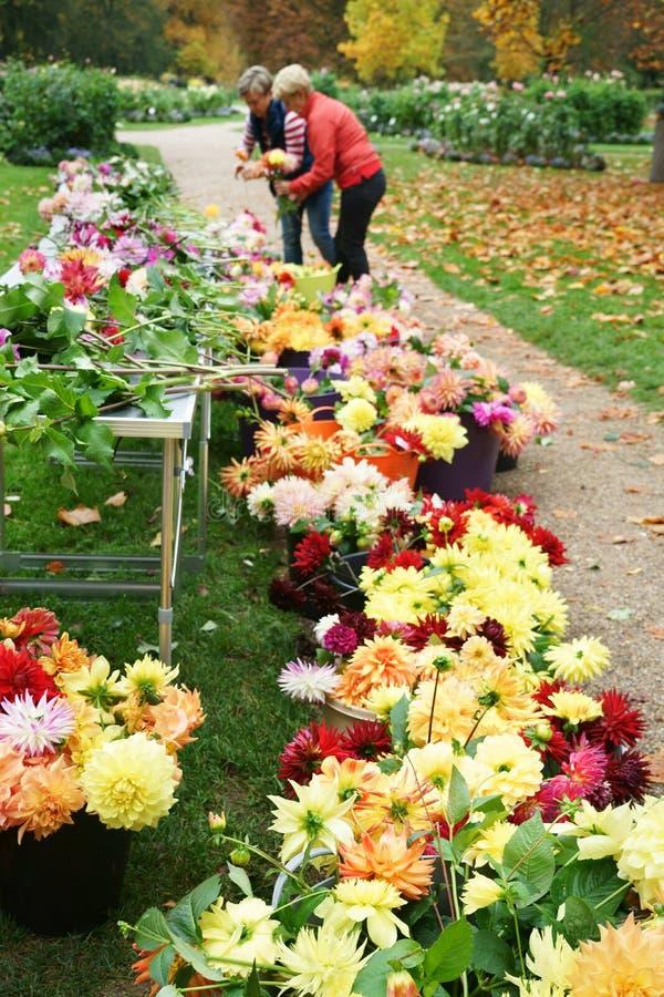 Corte dálias para o parque público Alemanha do jardim da dália da venda foto de stock royalty free