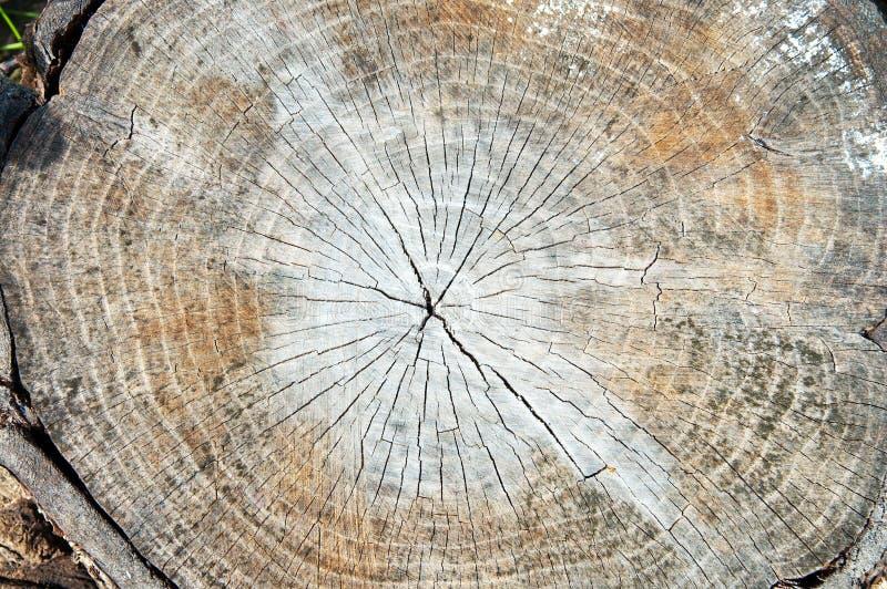 Download Corte da árvore foto de stock. Imagem de imagem, corte - 16851900