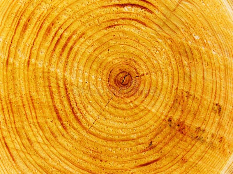 Corte da árvore fotografia de stock royalty free
