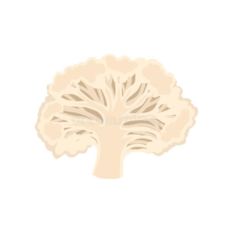 Corte da couve-flor Colagem de legumes frescos Ilustração do vetor ilustração royalty free