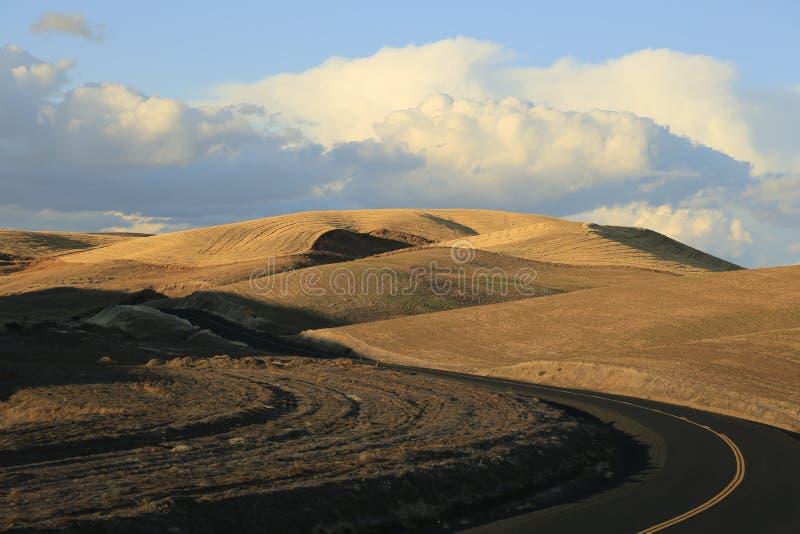 Corte de carreteras del zigzag a través de los campos de grano en el Palouse imagen de archivo