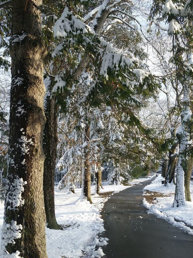 Corte de la calzada a través de un país de las maravillas del invierno imágenes de archivo libres de regalías