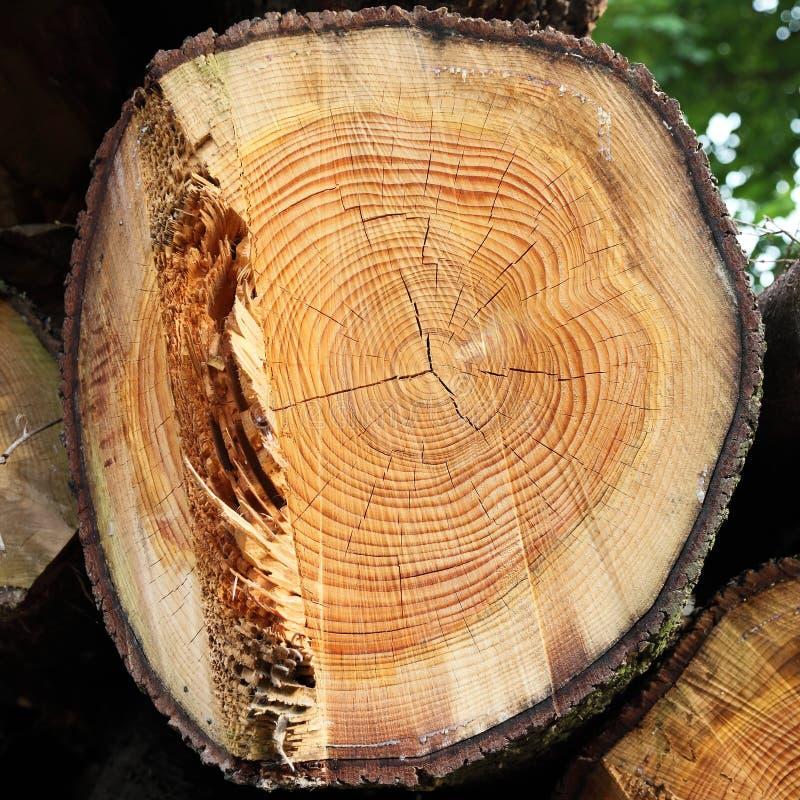 Corte de madeira do registro foto de stock royalty free