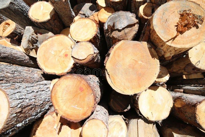 corte de muitos troncos pelo lenhador que forma uma pilha enorme de madeira fotografia de stock