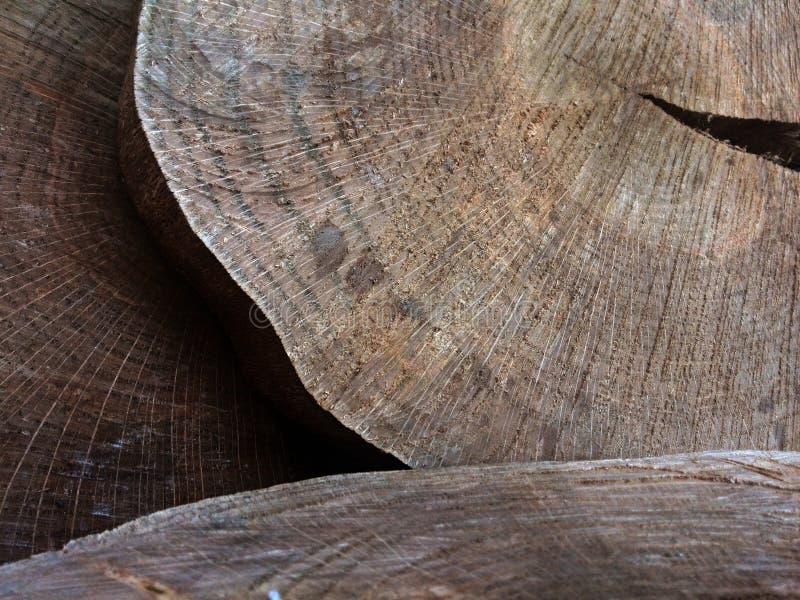 Corte del árbol o industria de la madera de construcción mostrada con los discos de madera imagen de archivo libre de regalías