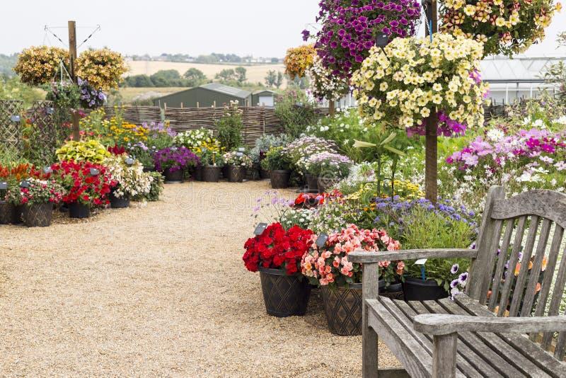 Corte del giardino di fiori con il banco di legno fotografia stock