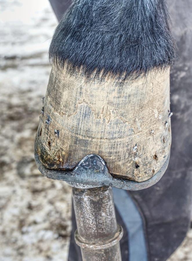 Corte del herrero de extremos de punta largos del clavo de acero en enganche del caballo imagen de archivo