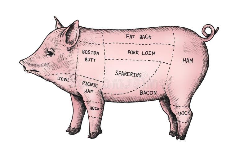 Corte dibujado mano del cerdo stock de ilustración