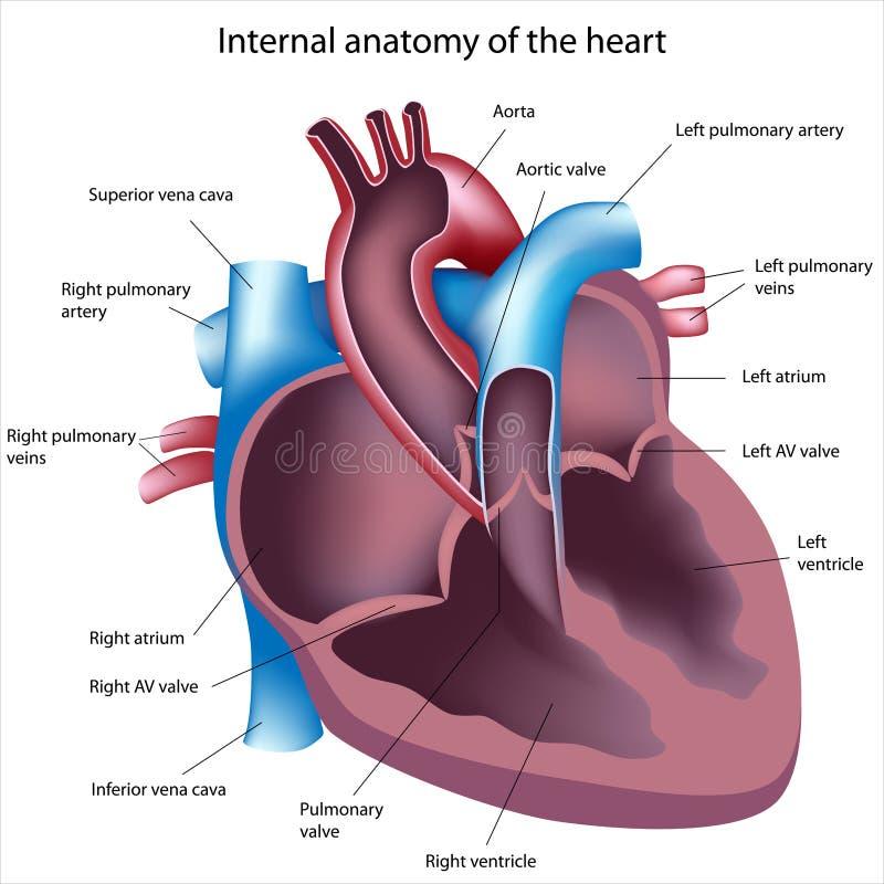 Corte do coração ilustração royalty free