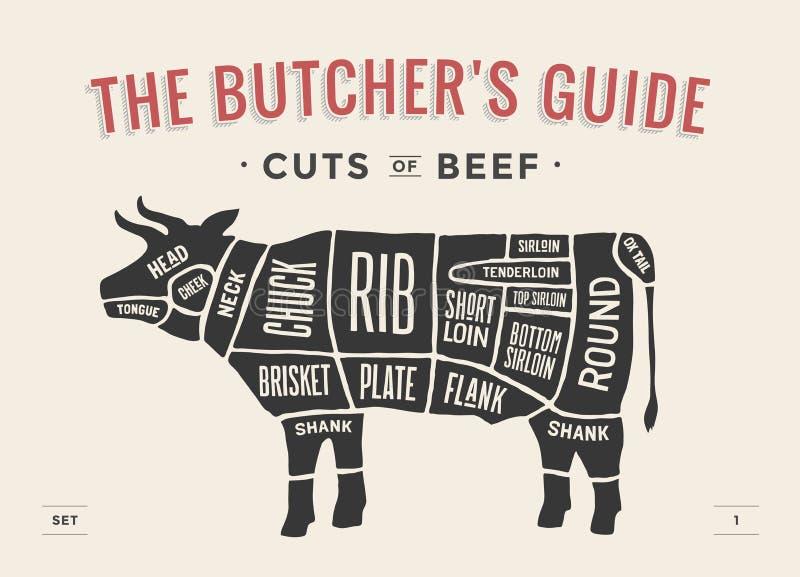 Corte do grupo da carne Diagrama do carniceiro do cartaz e esquema - vaca Desenhado à mão tipográfico do vintage Ilustração do ve ilustração royalty free