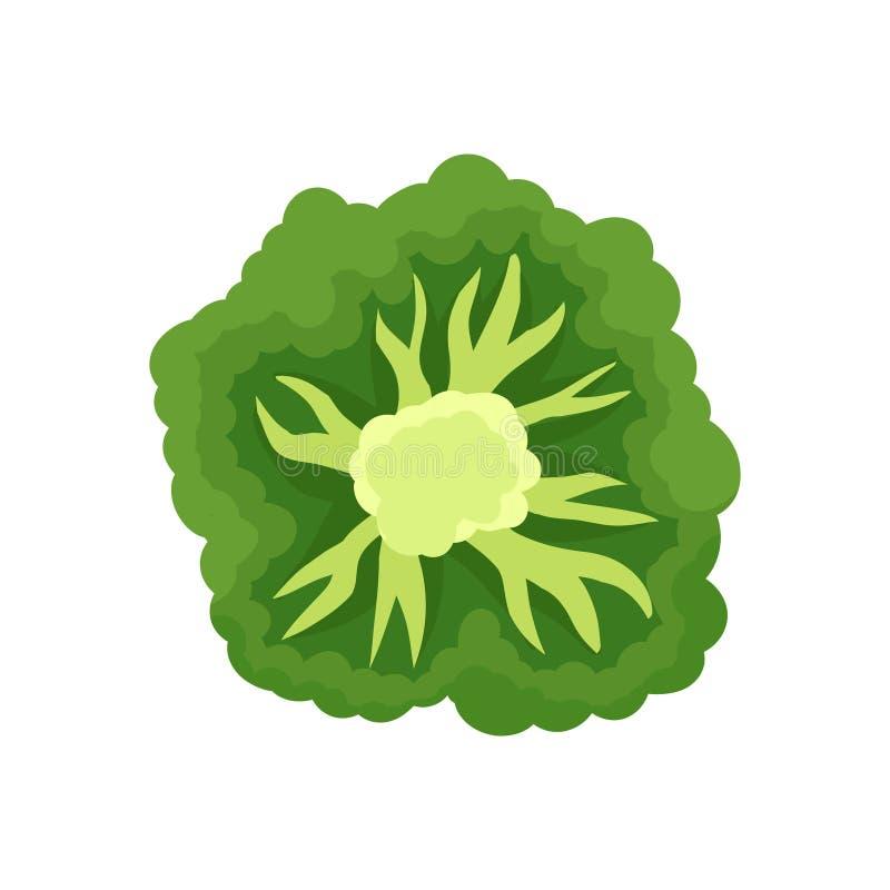 Corte dos brócolis Colagem de legumes frescos Ilustração do vetor ilustração royalty free