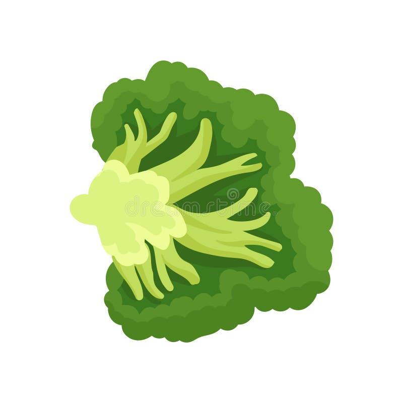 Corte dos brócolis Colagem de legumes frescos Ilustração do vetor ilustração stock