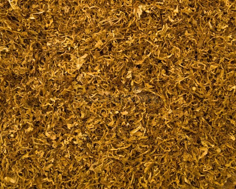 Corte el fondo del tabaco foto de archivo