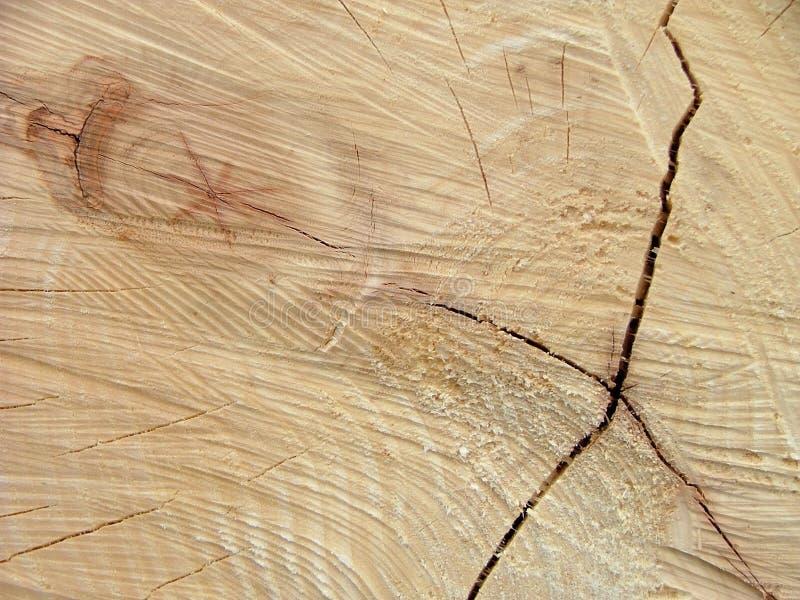 Corte el tronco de árbol fotografía de archivo