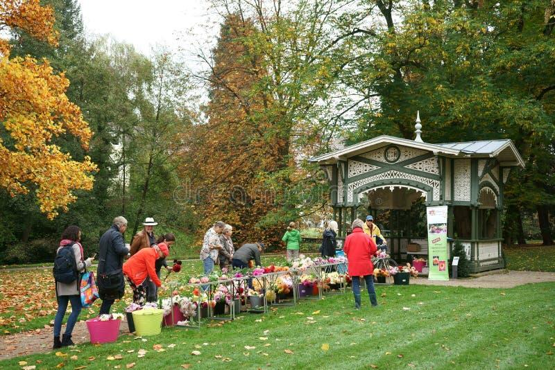 Corte flores da dália para a venda no parque público Alemanha da dália fotos de stock