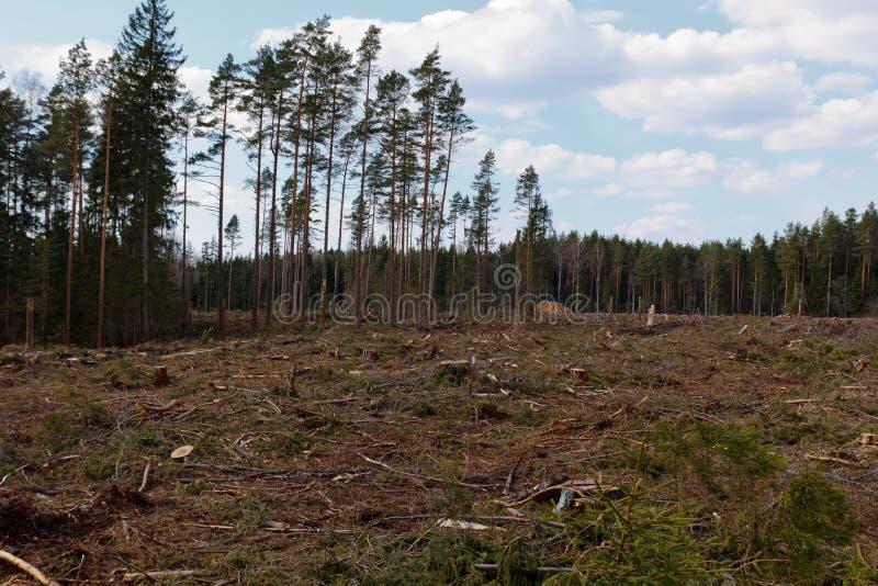 Corte a floresta fotografia de stock