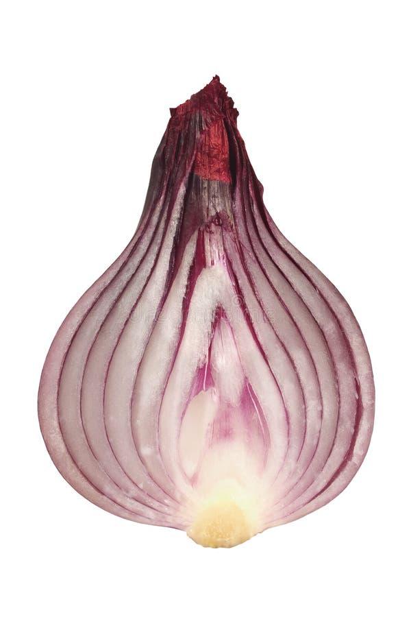 Corte la cebolla en blanco fotos de archivo libres de regalías