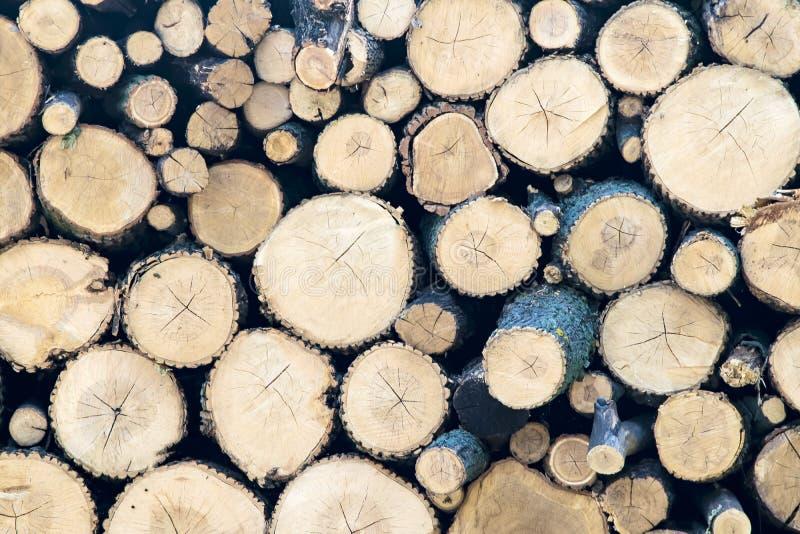 Corte los troncos de árbol en fondo natural seccionado transversalmente Materias primas para la industria de la carpintería fotografía de archivo libre de regalías