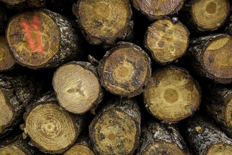 Corte los troncos de madera imágenes de archivo libres de regalías