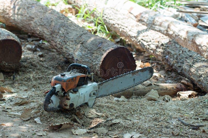 Corte a madeira com a serra de vaivém na oficina foto de stock
