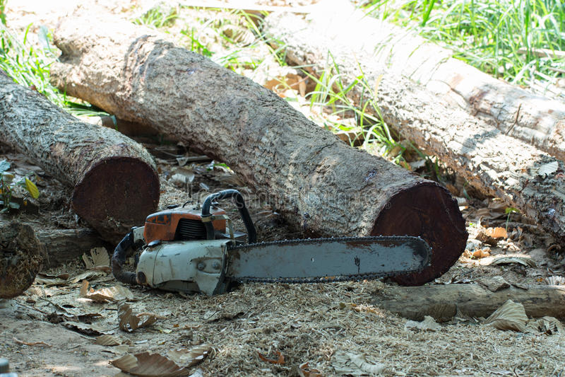 Corte a madeira com a serra de vaivém na oficina imagem de stock
