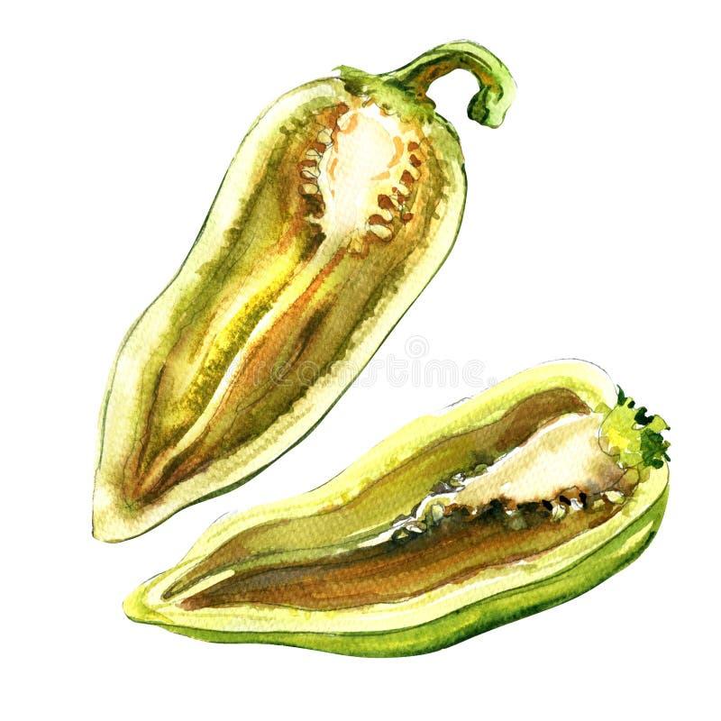 Corte a meia pimenta verde fresca crua, capsicum isolado, ilustração da aquarela ilustração stock