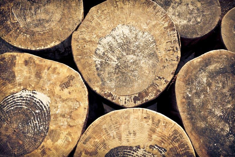 Corte o fundo dos troncos de árvore foto de stock