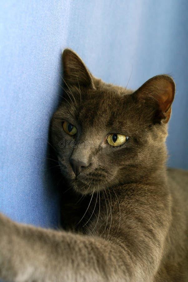 Corte o gato imagem de stock royalty free