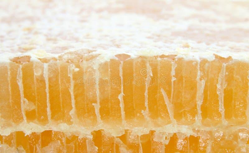Download Corte o pente do mel foto de stock. Imagem de dourado, tampado - 110712