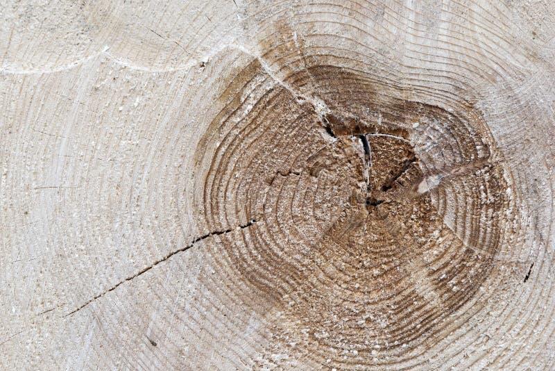 Corte o tronco de árvore fotografia de stock