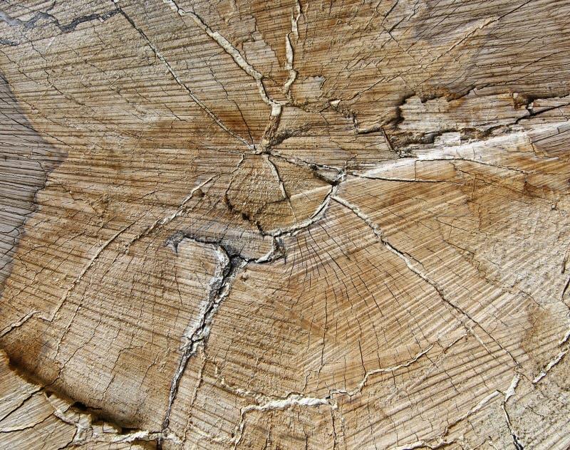 Corte o tronco de árvore - anéis anulares fotos de stock