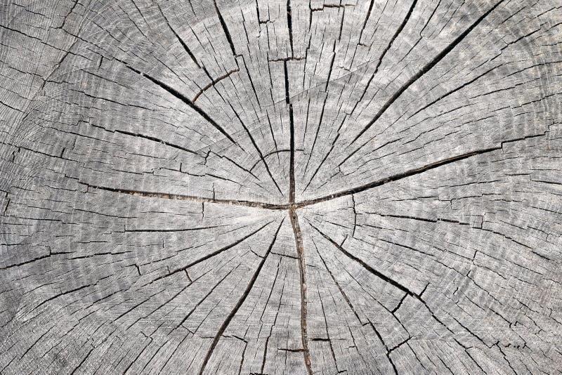 Corte o tronco de árvore - anéis anulares imagens de stock