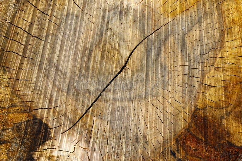Corte o tronco de árvore - textura da madeira fotografia de stock