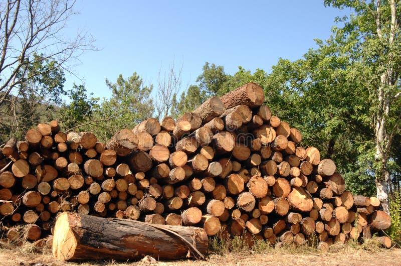Corte os troncos empilhados na floresta fotografia de stock royalty free