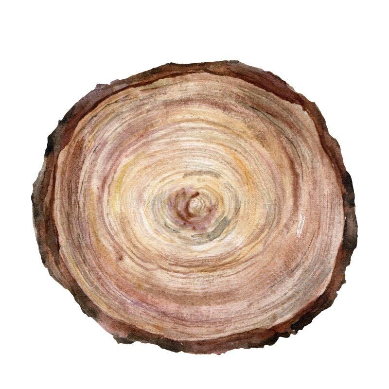 Corte transversal de la acuarela de un árbol Árbol pintado a mano aislado en el fondo blanco Ejemplo floral natural para ilustración del vector