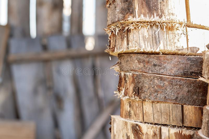 Corte transversal de madera Secci?n representativa de un ?rbol imagenes de archivo