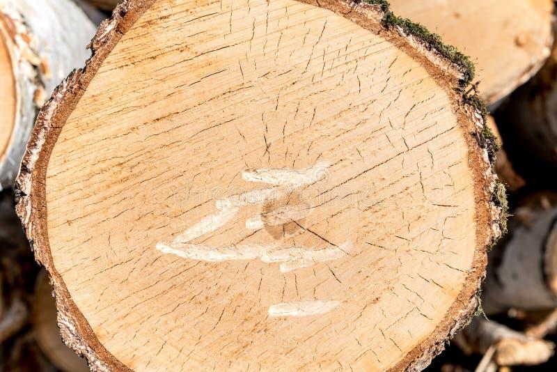 Corte transversal de un tronco y de un tocón de árbol Estructura de la madera Roun imagen de archivo libre de regalías
