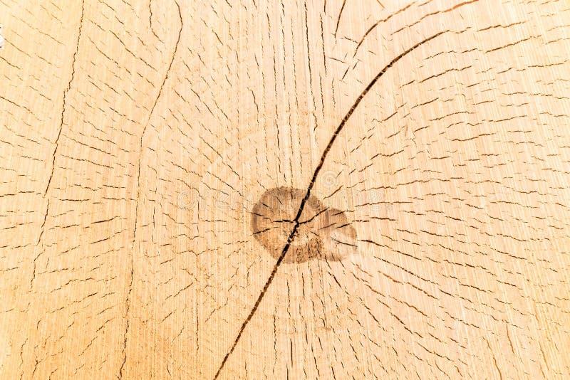 Corte transversal de un tronco y de un tocón de árbol Estructura de la madera Roun fotografía de archivo libre de regalías