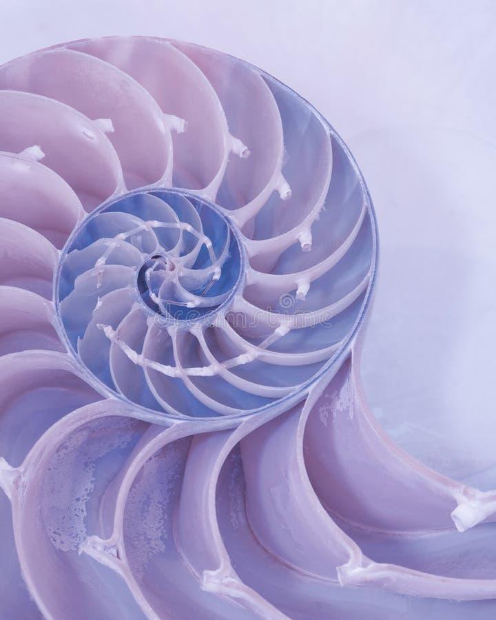 Corte transversal de una cáscara del nautilus en colores en colores pastel foto de archivo