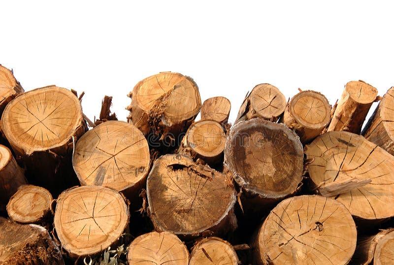 Corte troncos no fundo branco imagem de stock royalty free
