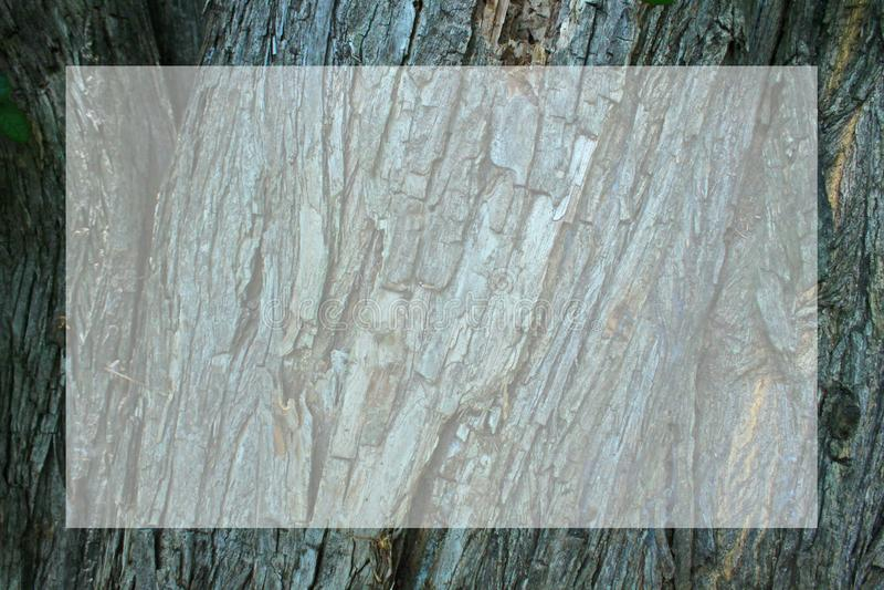 Corteccia del fondo di legno di superficie ruvida della struttura dell'albero illustrazione vettoriale