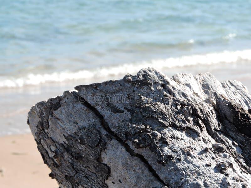Corteccia del mare immagini stock
