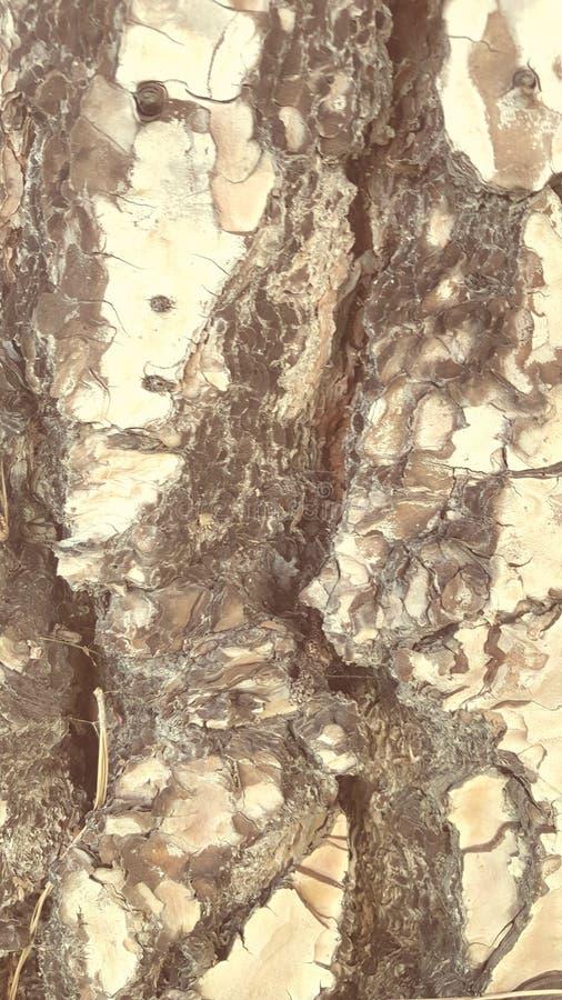 Corteccia 1 del pino fotografie stock libere da diritti