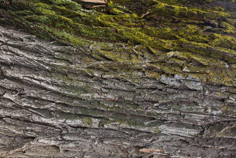 Corteccia dell'albero fotografia stock