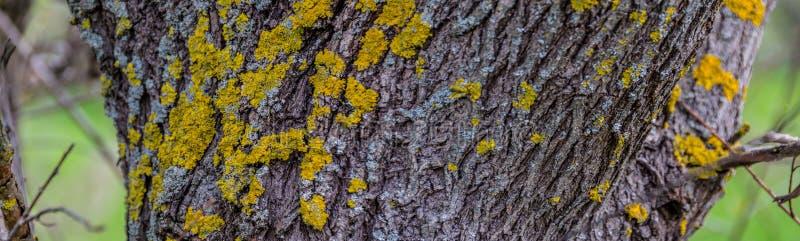 Corteccia dell'albero coperta di muschio fotografie stock