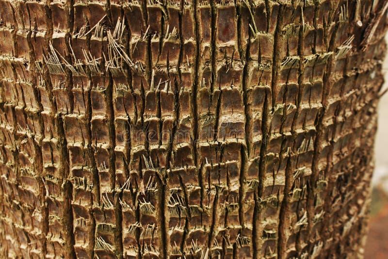 Corteccia della palma fondo esotico con il posto per testo fotografia stock