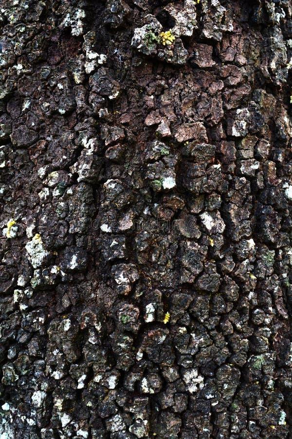 Corteccia di alberi fotografia stock